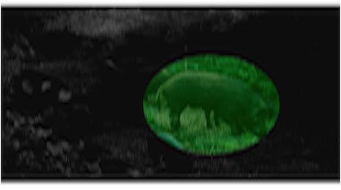 green bpg 1 hog hunting kit big pig lights. Black Bedroom Furniture Sets. Home Design Ideas